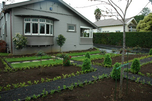 formal front garden newly planted with box edging and cones - Garden Design Nz