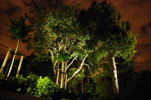 large trees lit with green tinted landscape lights